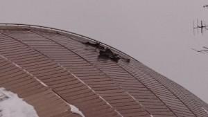 水夢館の屋根