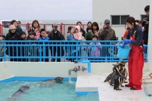 フンボルトペンギンのエサやり