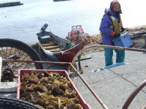 16ウニ漁