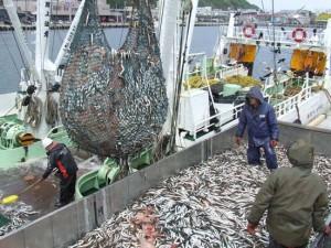 16オオナゴ漁