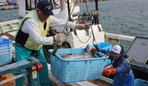 抜海秋鮭漁